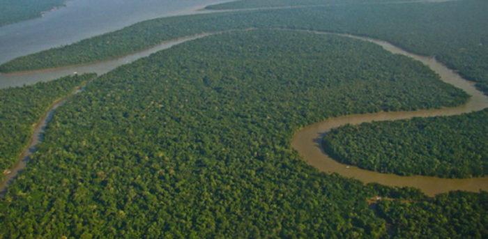 Governo e a proteção ambiental